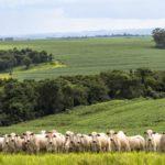 Valor da Produção Agropecuária 2020 é estimado em R$ 771,4 bilhões